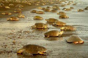 g adventures costa rica turtles