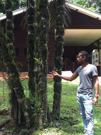 sur_julio with tree