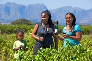 Afrique du Sud: province du Cap Occidental
