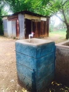 Nic water fountain