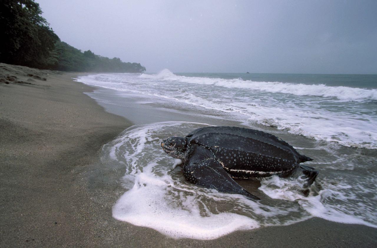 Save the Turtles – Nicaragua Volunteer Vacation